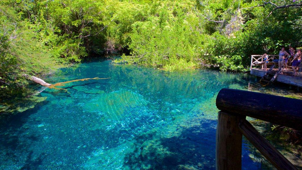 Parque Ecológico Ojos Indígenas ofreciendo un lago o abrevadero y un jardín