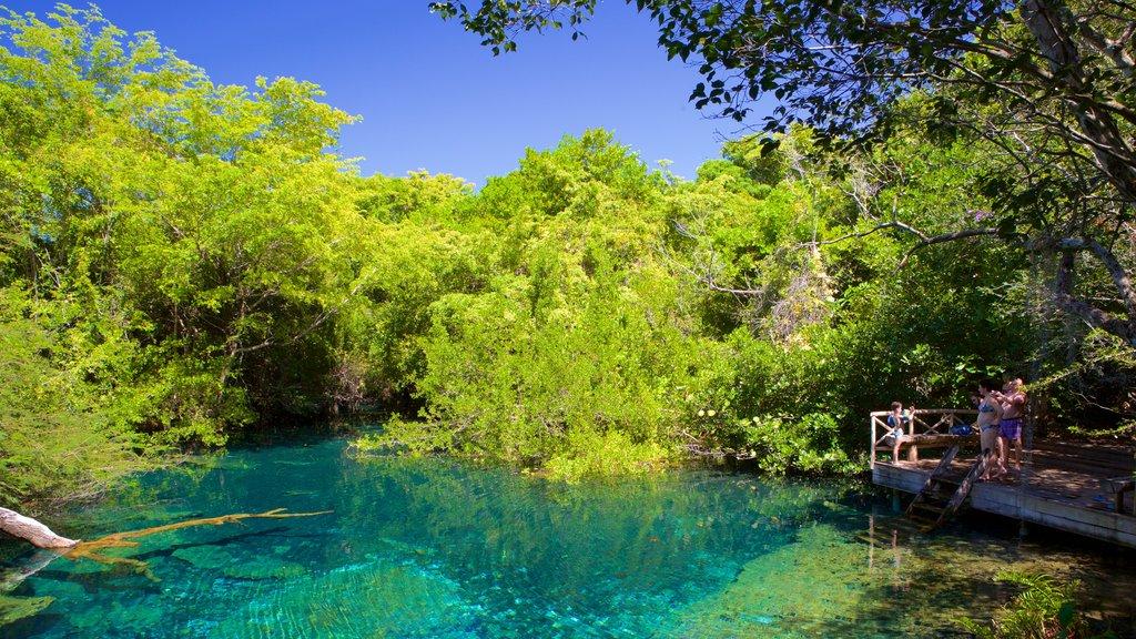 Parque Ecológico Ojos Indígenas que incluye un jardín y un lago o abrevadero
