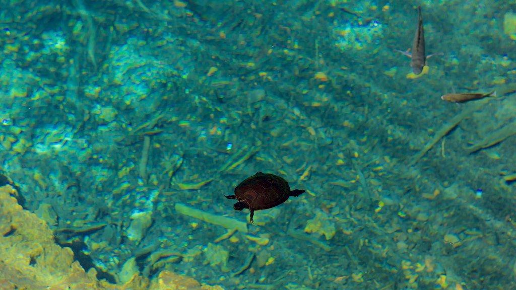 Parque Ecológico Ojos Indígenas ofreciendo vida marina y un lago o abrevadero