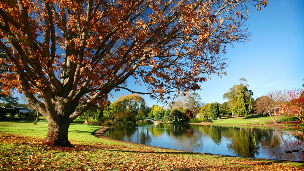Darling Downs featuring a pond, autumn leaves and a garden