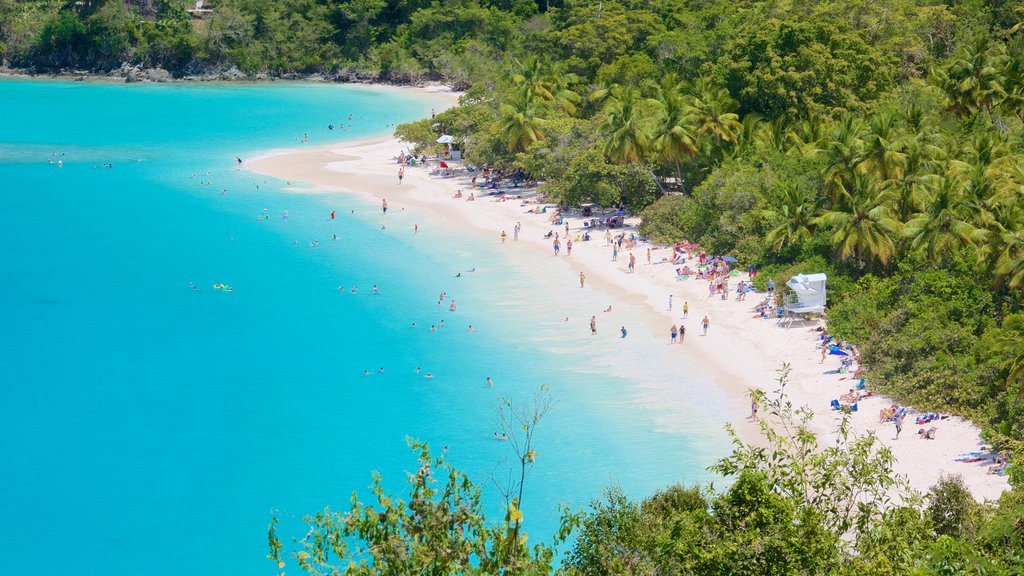 Trunk Bay showing tropical scenes and a beach