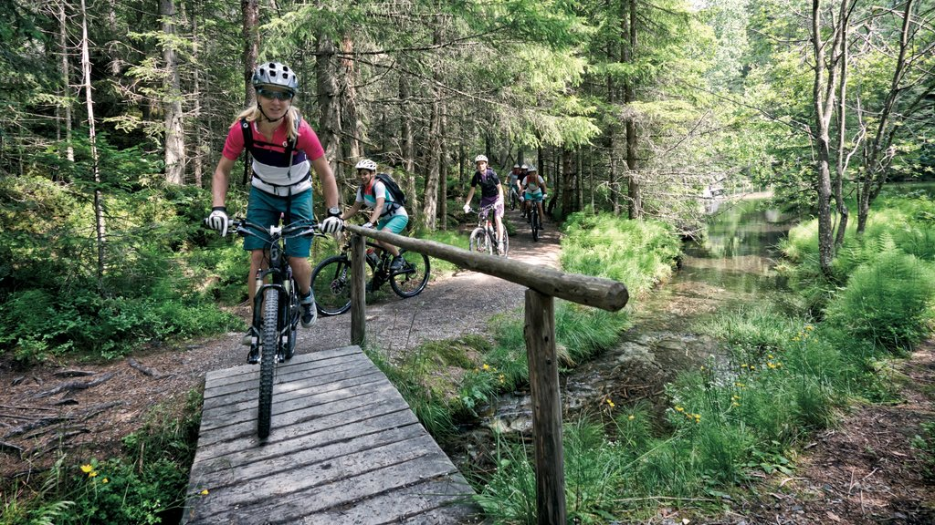 Austria which includes mountain biking and forests
