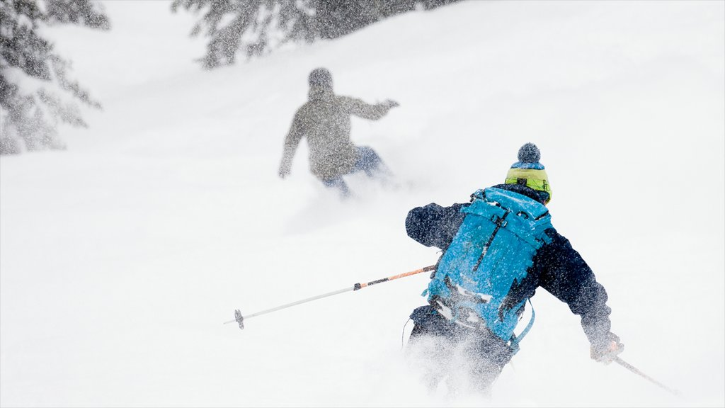 Fernie Alpine Resort showing snow and cross country skiing