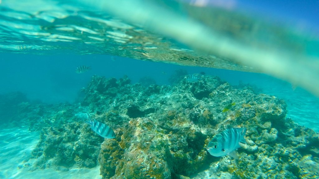 Aitutaki which includes colorful reefs and marine life