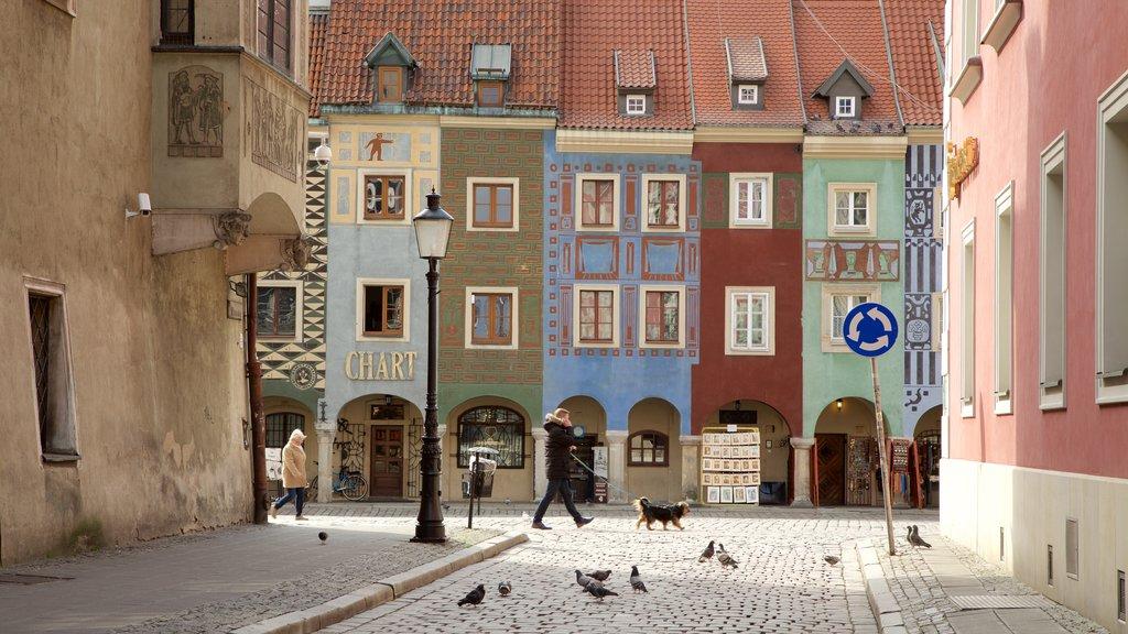Stary Rynek featuring bird life