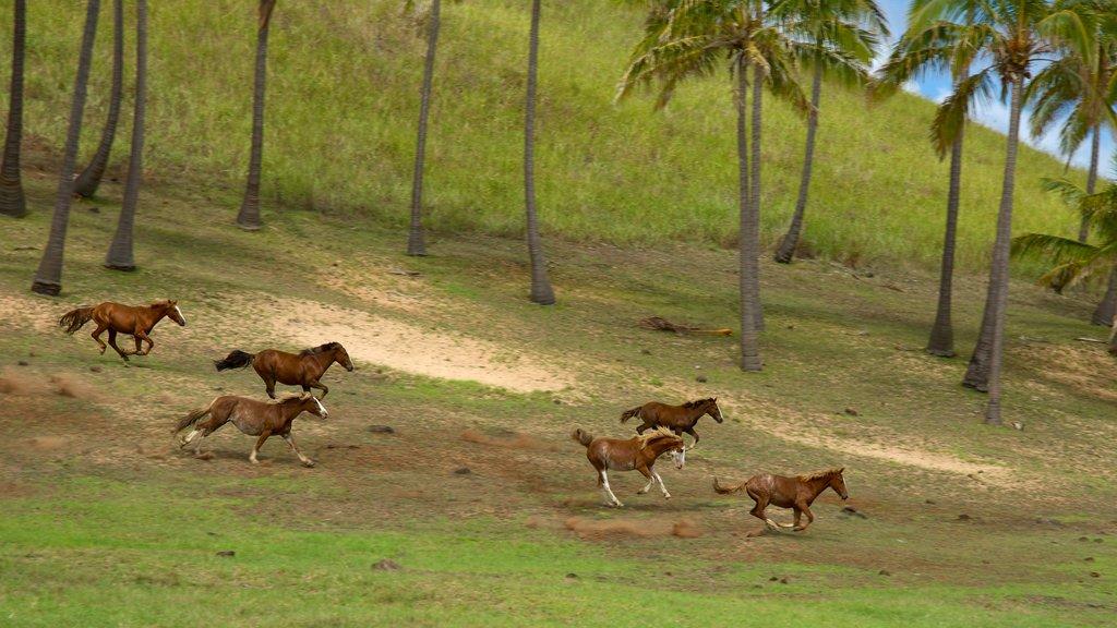 Anakena Beach featuring animals