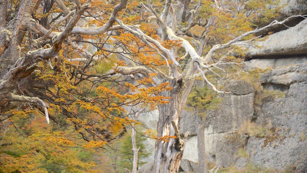 Cueva del Milodon showing forest scenes