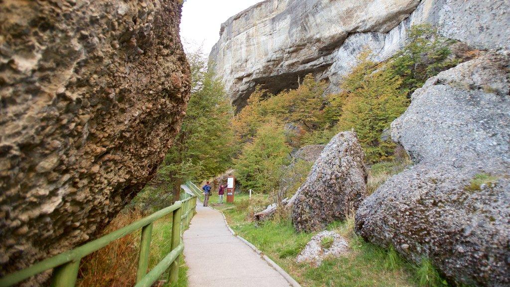 Cueva del Milodon featuring forests