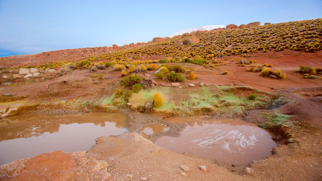El Tatio Geyser Field which includes tranquil scenes and desert views