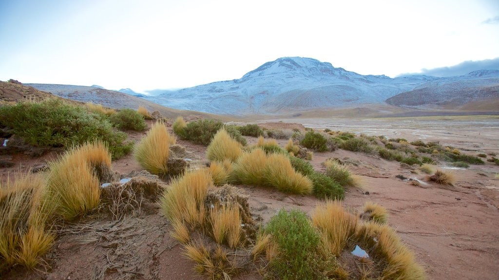 El Tatio Geyser Field showing landscape views