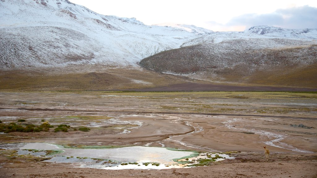 El Tatio Geyser Field featuring mountains and tranquil scenes
