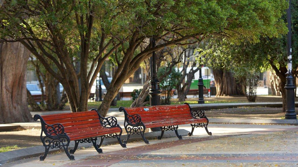 Plaza Munoz Gamero showing a park