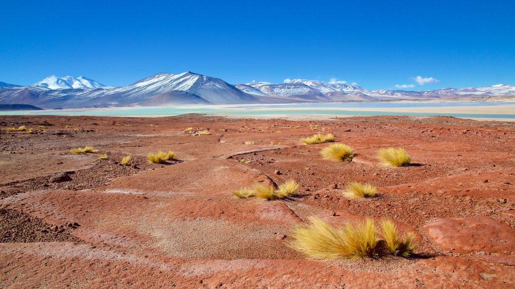 San Pedro de Atacama showing landscape views, a lake or waterhole and tranquil scenes