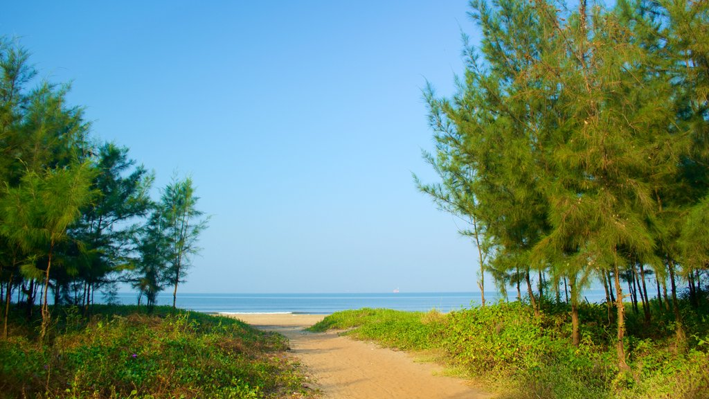 Miramar Beach which includes forests, general coastal views and a sandy beach