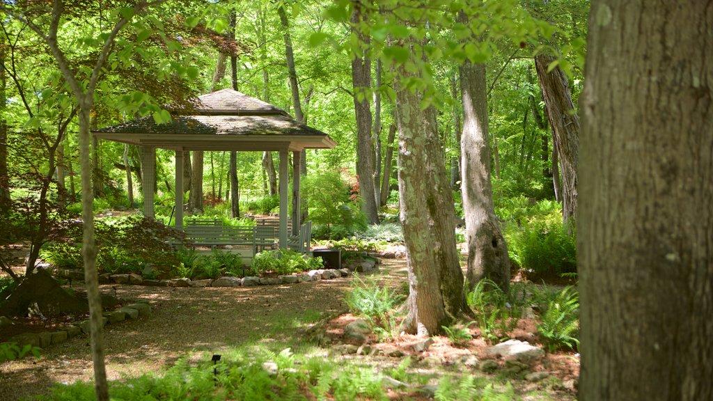 Huntsville Botanical Garden mostrando un jardín y escenas forestales