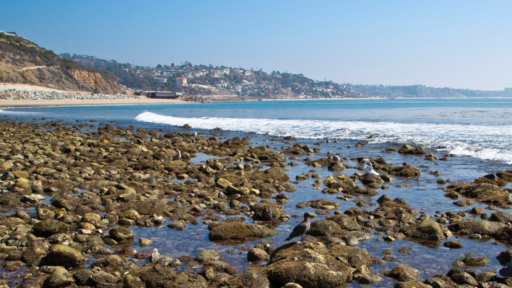 Malibu which includes a pebble beach
