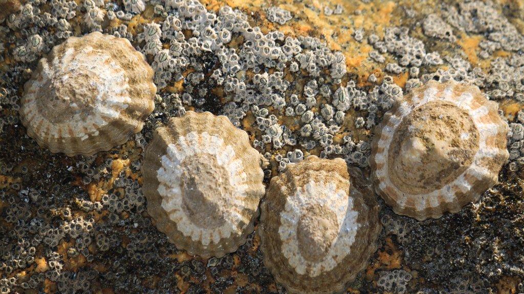 Flinders Island featuring general coastal views, marine life and rocky coastline