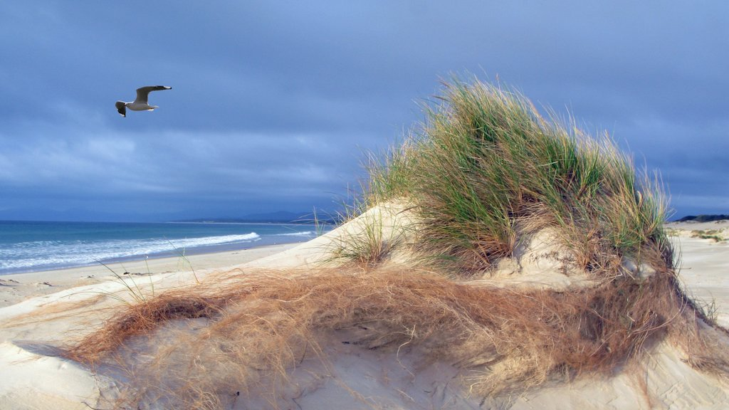 St. Helens ofreciendo vistas generales de la costa y una playa