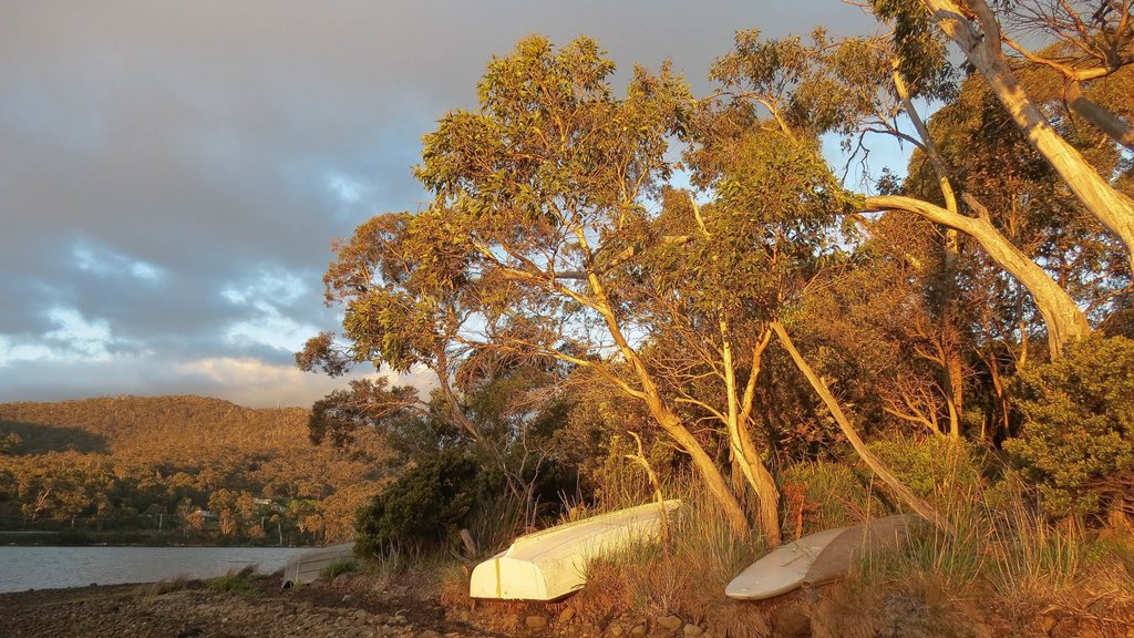 Eaglehawk Neck featuring general coastal views, forests and a sunset