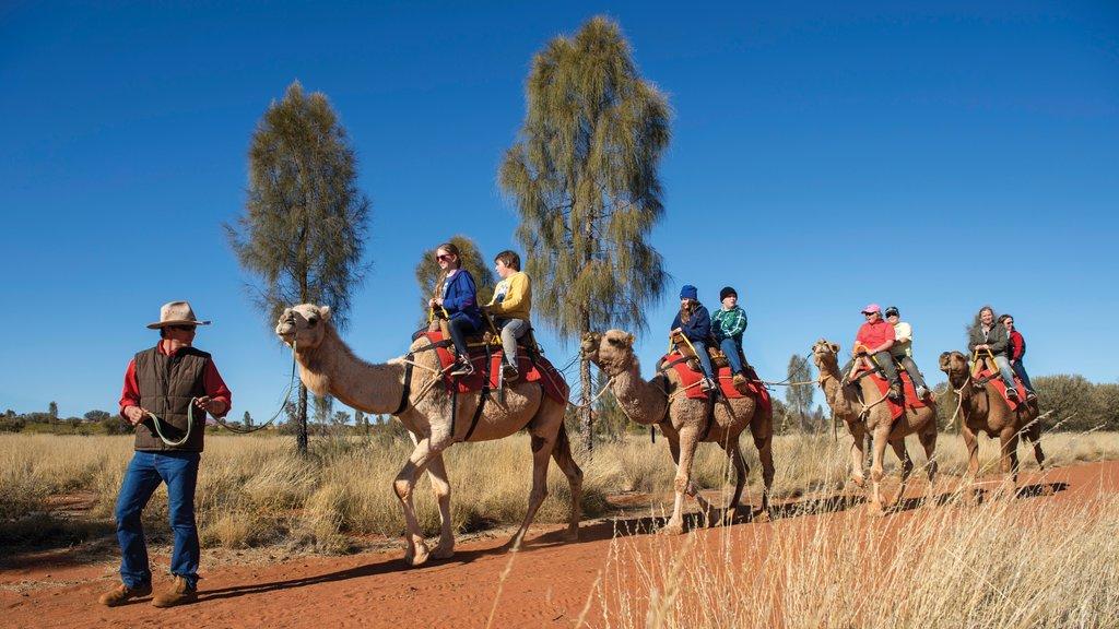 Parque Nacional Uluru-Kata Tjuta ofreciendo vistas al desierto y animales terrestres y también un pequeño grupo de personas