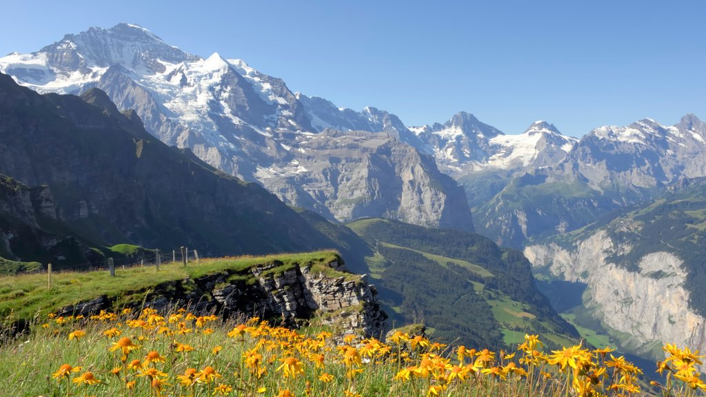 Lauterbrunnen which includes wildflowers, tranquil scenes and mountains