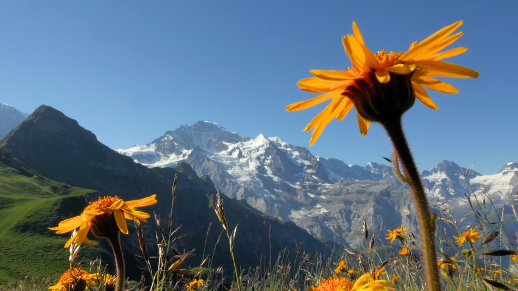 Lauterbrunnen showing mountains, tranquil scenes and wildflowers