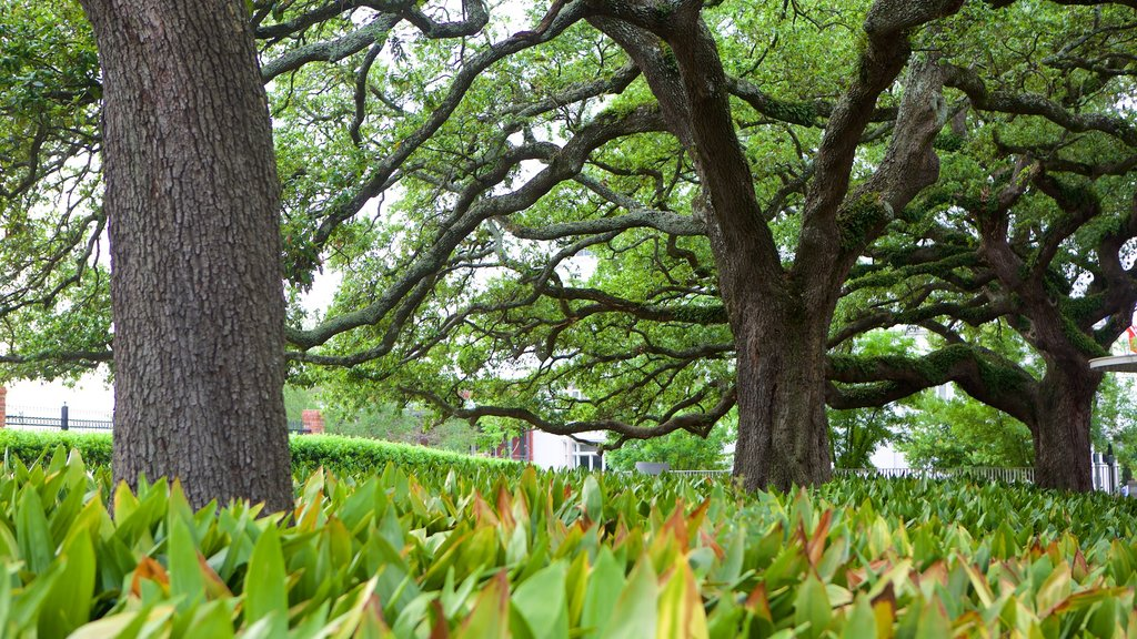 Baton Rouge which includes a park