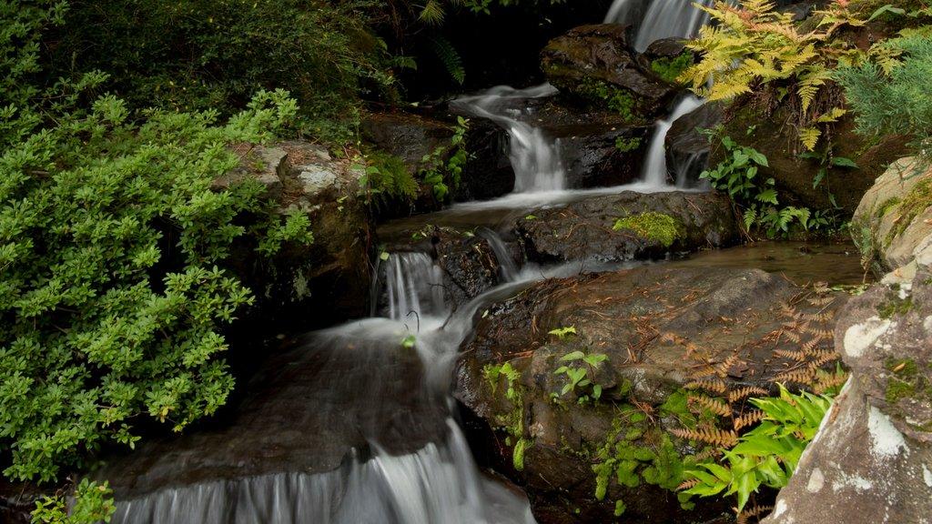 Hot Springs que incluye un jardín y una catarata