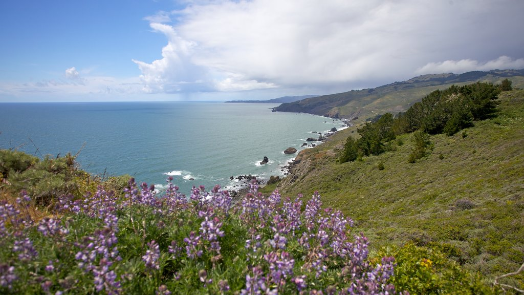 Marin County featuring general coastal views, wildflowers and tranquil scenes