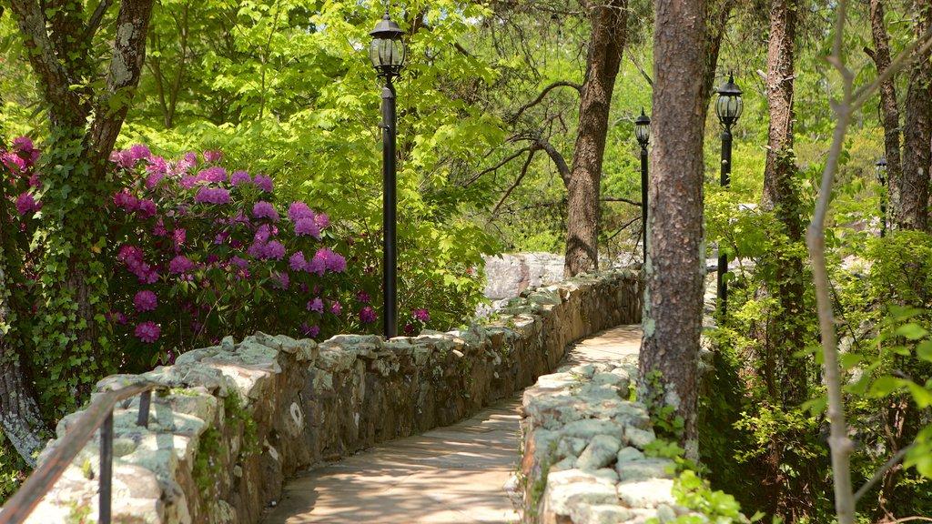 Lookout Mountain ofreciendo un jardín