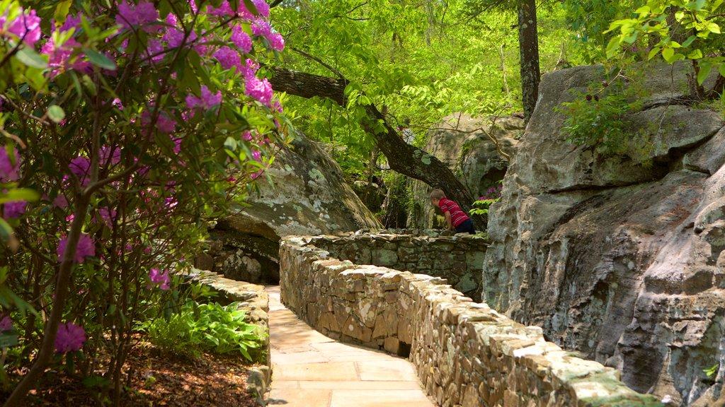 Lookout Mountain que incluye un parque