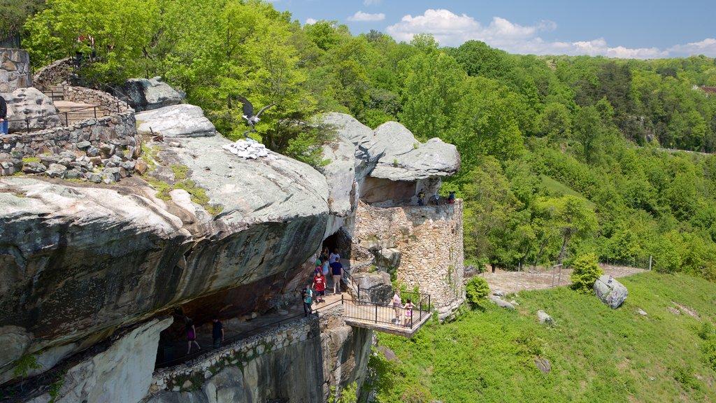 Lookout Mountain que incluye bosques y vistas y también un pequeño grupo de personas