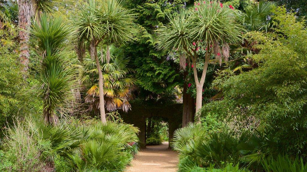 Abbotsbury Sub-Tropical Gardens which includes a park