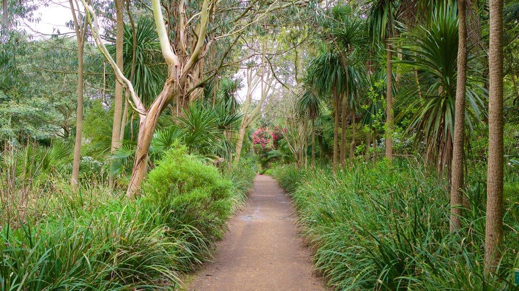 Abbotsbury Sub-Tropical Gardens which includes a garden