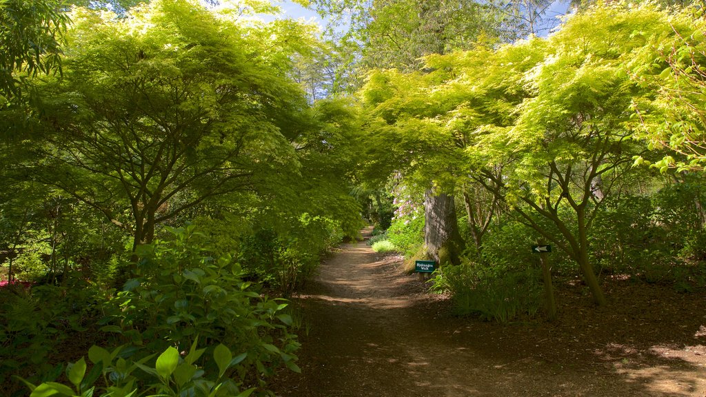 Abbotsbury Sub-Tropical Gardens which includes forest scenes
