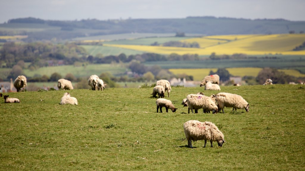 Maiden Castle featuring animals and tranquil scenes
