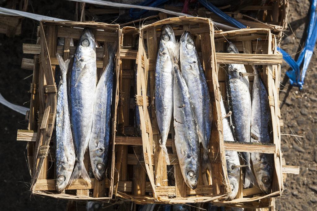 Fishing in Bali