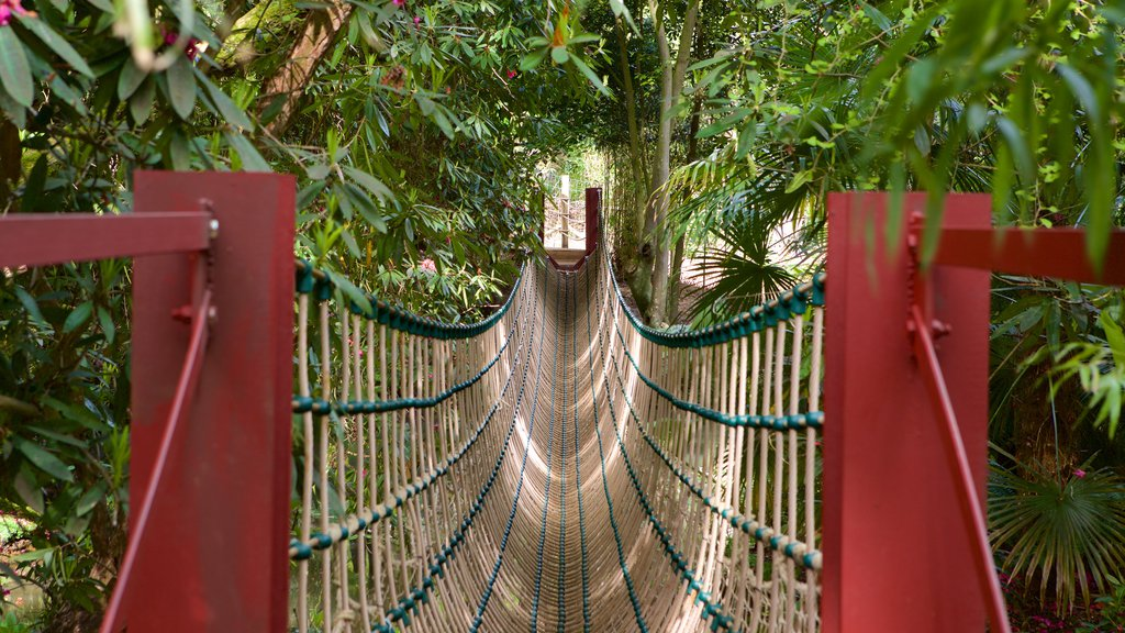 Abbotsbury Sub-Tropical Gardens which includes forest scenes and a suspension bridge or treetop walkway