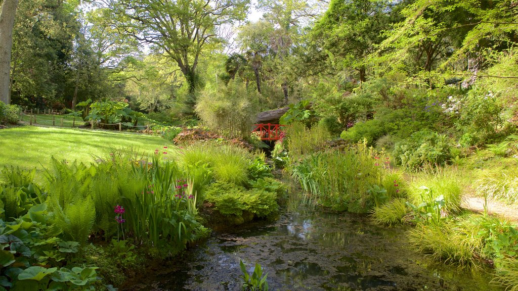 Abbotsbury Sub-Tropical Gardens which includes a garden and a pond