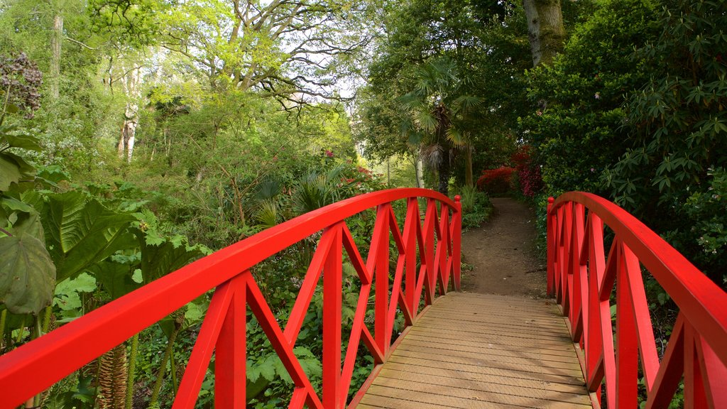 Abbotsbury Sub-Tropical Gardens which includes forests and a bridge