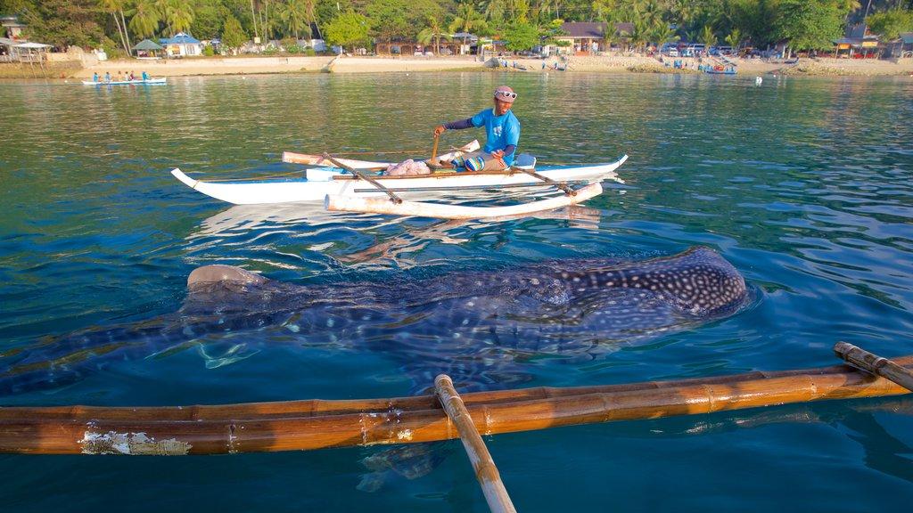 Cebu showing marine life, general coastal views and kayaking or canoeing