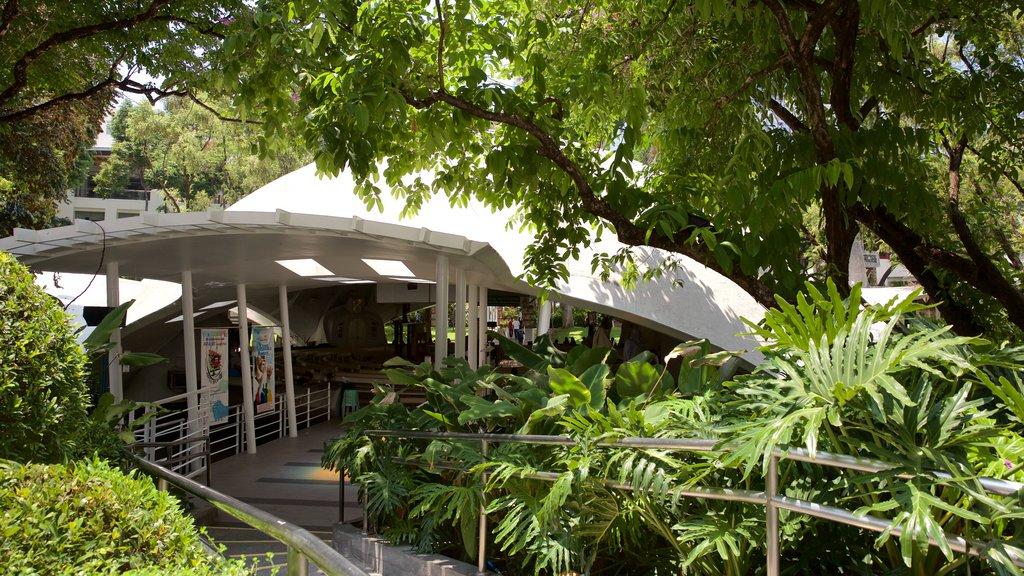 Makati featuring a garden