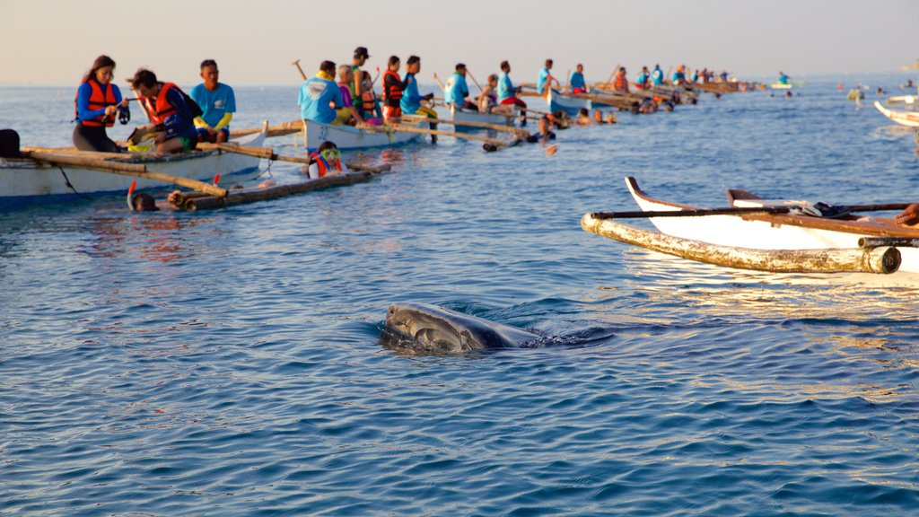Oslob showing general coastal views, marine life and kayaking or canoeing