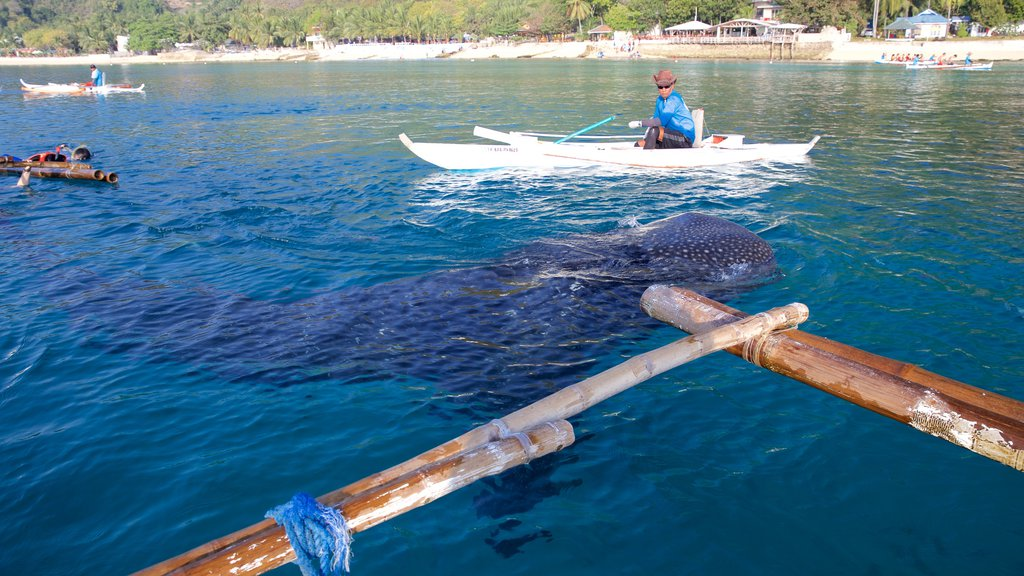 Oslob which includes kayaking or canoeing, marine life and general coastal views