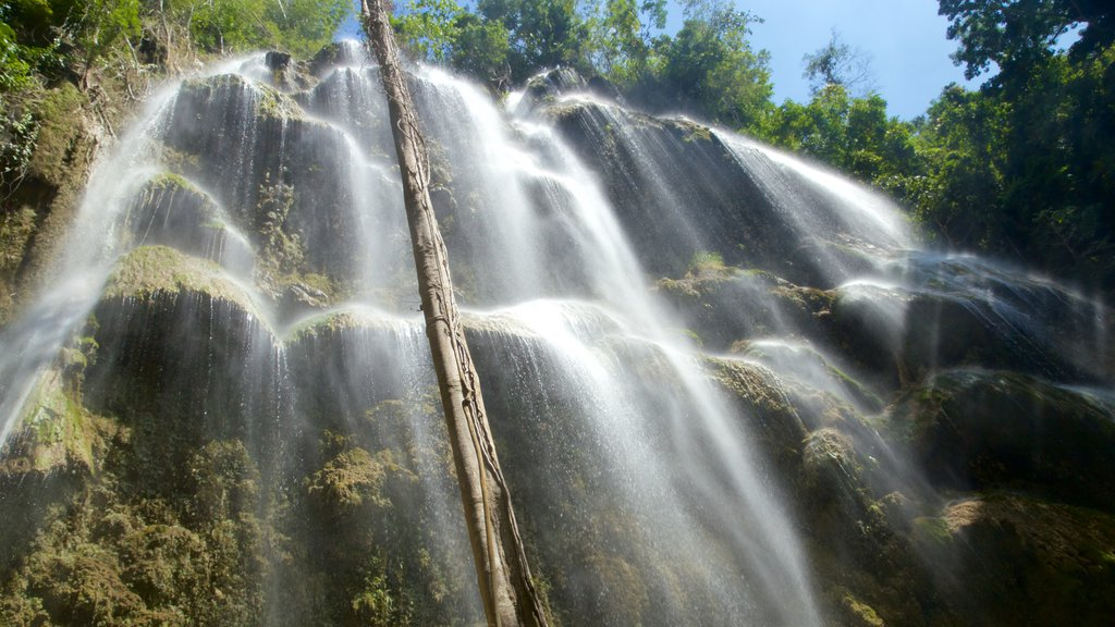 Oslob showing a waterfall