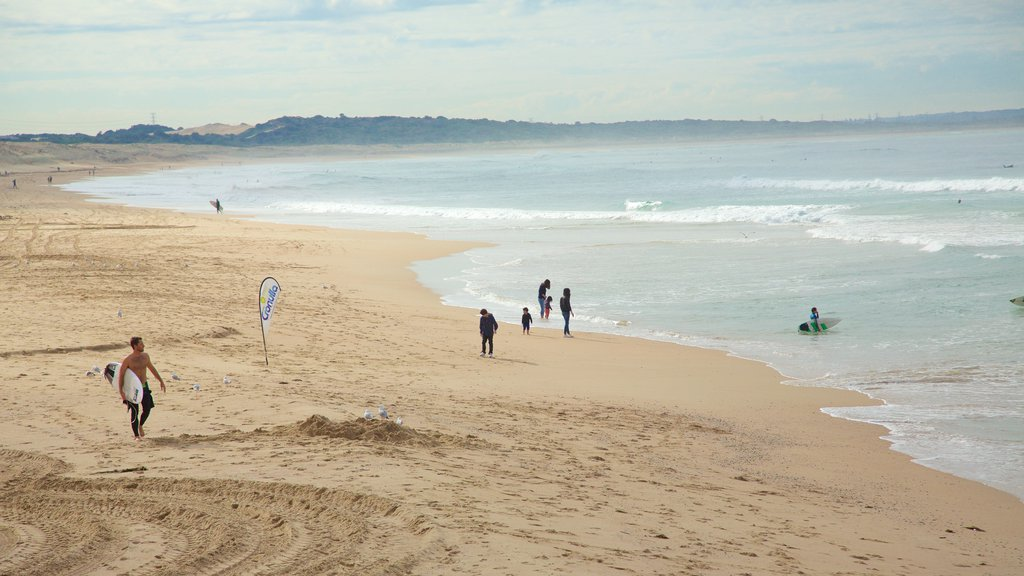 Cronulla Beach showing a sandy beach