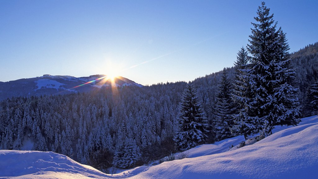 Scheffau am Wilden Kaiser featuring a sunset, snow and forests