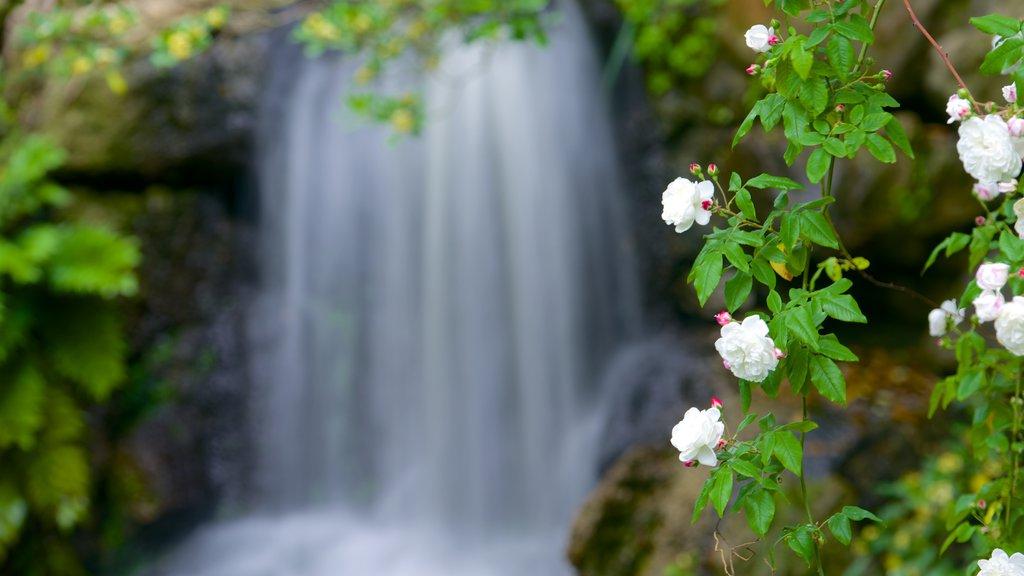 Jardin Public ofreciendo un parque, flores y una cascada