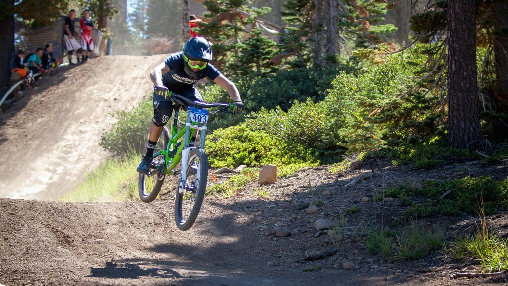 Northstar California Resort showing mountain biking as well as an individual male