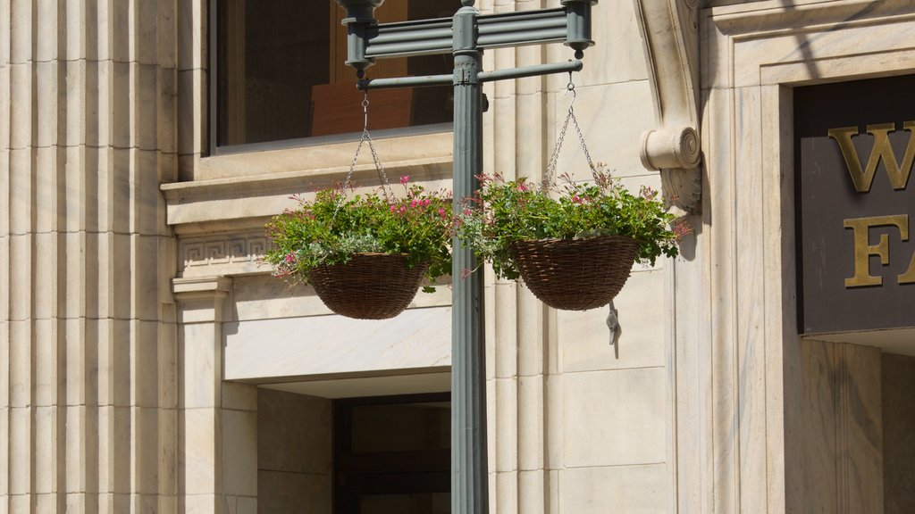 Roanoke featuring flowers